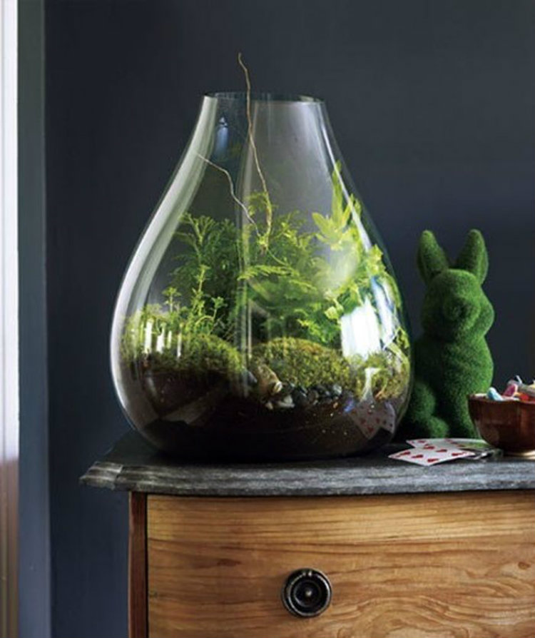 A Warm Winter for Your Living Room A Warm Winter for Your Living Room A Warm Winter for Your Living Room bonsai 2