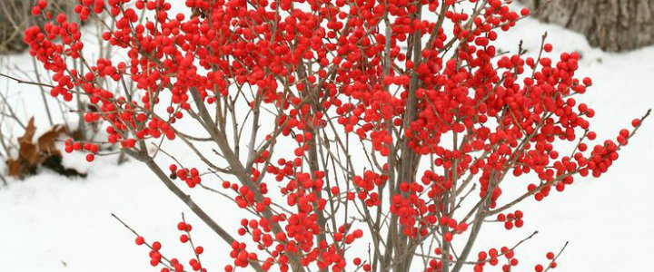 How to take care of your garden during the winter