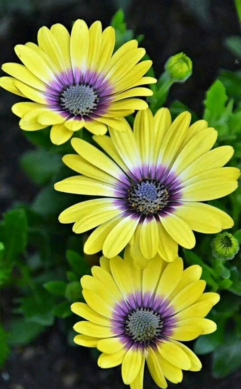winter flowers, flower, winter, home décor ideas, decoration ideas, colorful room, flower choices flower choices The Best Flower Choices to Decorate your Home in Winter Time gerberas 1