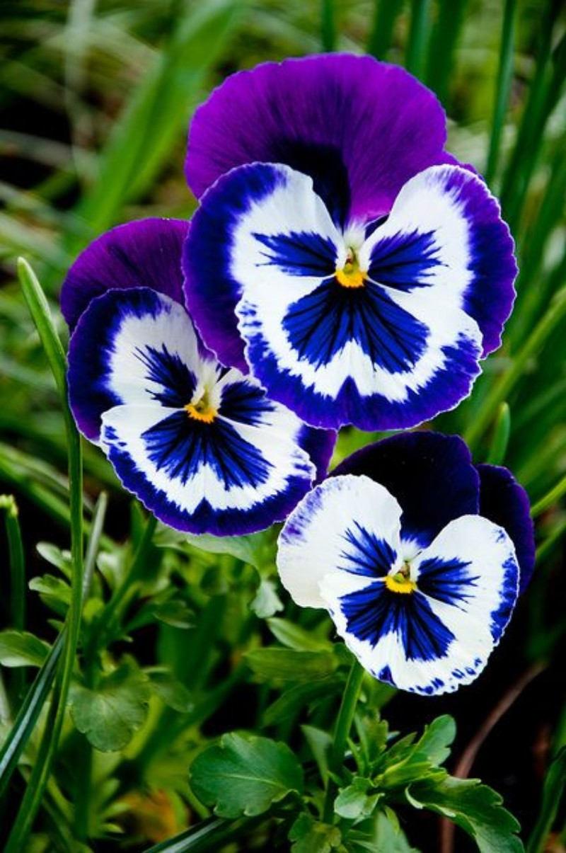 winter flowers, flower, winter, home décor ideas, decoration ideas, colorful room, flower choices flower choices The Best Flower Choices to Decorate your Home in Winter Time pansies