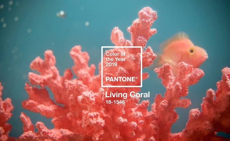 color of the year, home decor ideas, color trend, pantone color, living coral, pantone color of the year, color of the year, limited edition, color palette pantone color Living Coral: The Limited Edition Pantone Color Of 2019 Living Coral The Limited Edition Pantone Color Of 2019 2